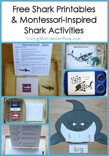 LOTS of free shark printables plus ideas for using free printables to create Montessori-inspired shark activities