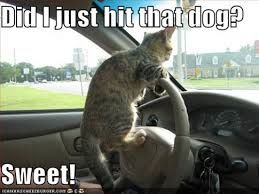 never let your cat drive alone