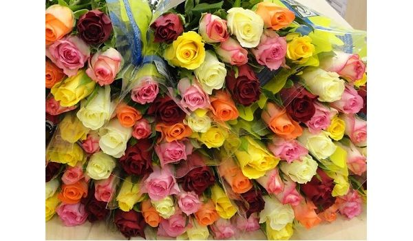 Florimex Fairtrade Roses