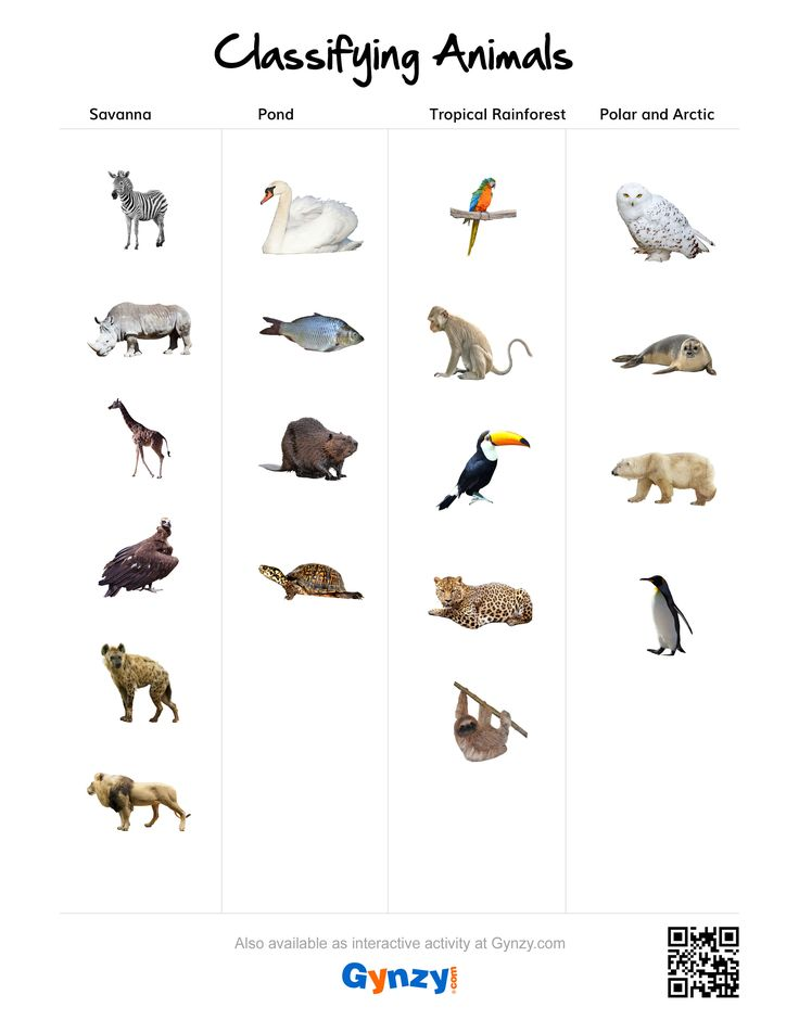 Making Predictions Worksheets 3rd Grade  Best Classifying Animals Images On Pinterest  Classifying  Antonyms Worksheets For Grade 1 Excel with Life Cycle Of A Star Worksheet Pdf Savanna Pond Tropical Rainforest Or Polar And Arctic Https   Classifying Animalsrainforestspondsworksheetstropicalkeys Worksheet Alphabet Word