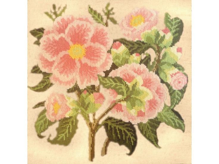 Camellia   Elizabeth Bradley
