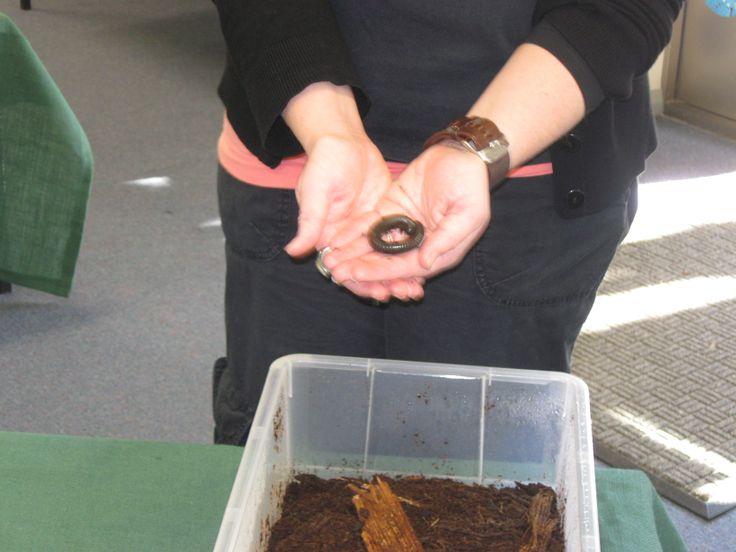 Menai Primary School Mini Beast Travel Bugs incursion