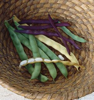 Heirloom Bean Varieties. Learn all there is to know about planting, harvesting and saving heirloom bean seeds as well as the history behind some of the rarest and oldest heirloom beans. From MOTHER EARTH NEWS magazine.