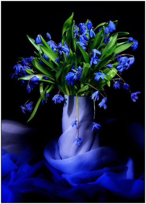 blue flower vignette