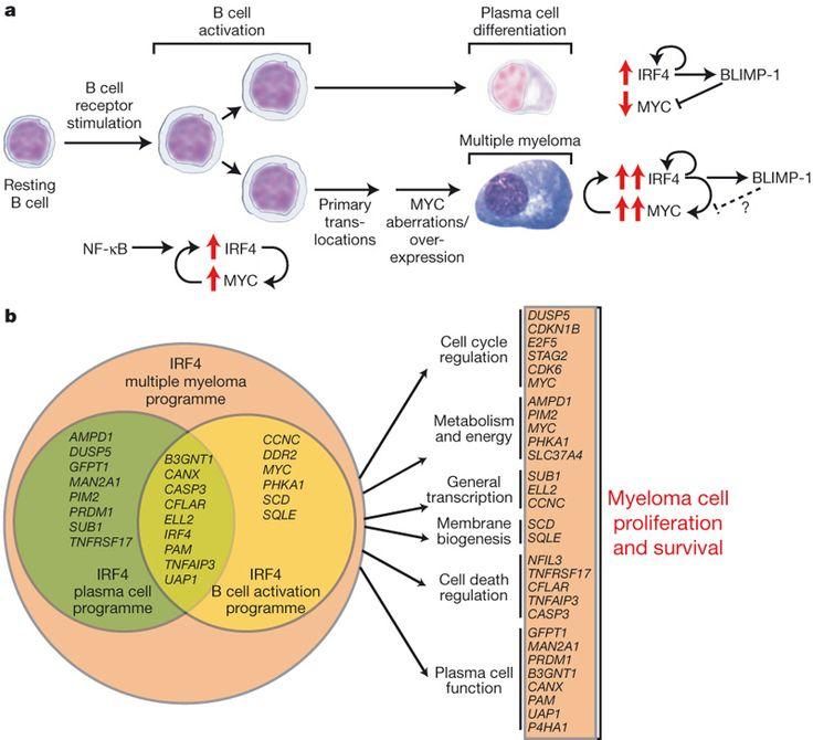 25 best Multiple myeloma images on Pinterest | Multiple ... Multiple Myeloma Cancer