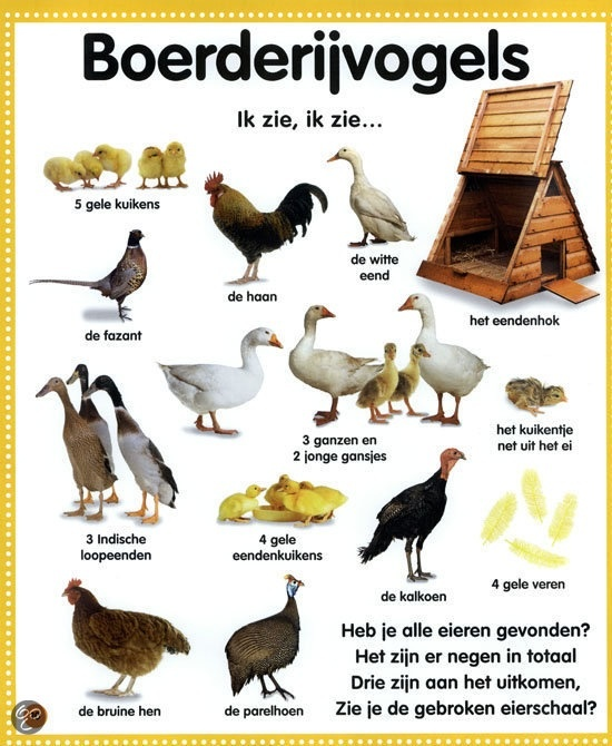 Learning Dutch - birds that live on the farm