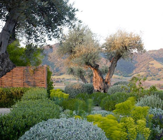 Mediterranean Style Gardens: 104 Best Mediterranean Images On Pinterest