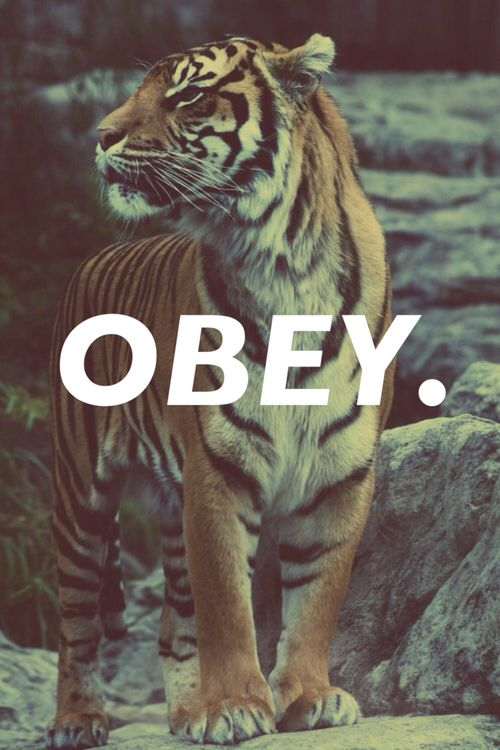 Obey Wallpaper Iphone 64 Best Dope A Shit Images On Pinterest My Style