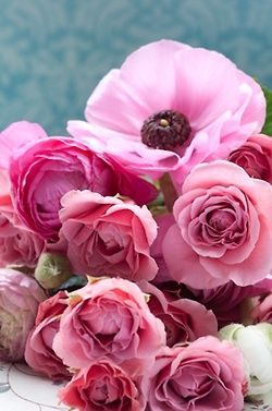 altripezzidime:❤: Pink Flowers, Fabulous Flowers Pl, Pretty In Pink, Pretty Colors, Pinktast Flowers, Pink Rose, Fabulous Flowerspl, Unend Beautiful, Pink Poppies