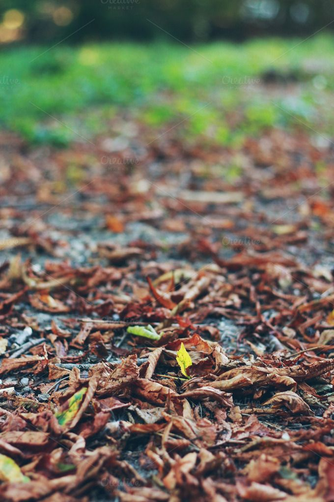 Check out Autumn leaves by Pixelglow Images on Creative Market