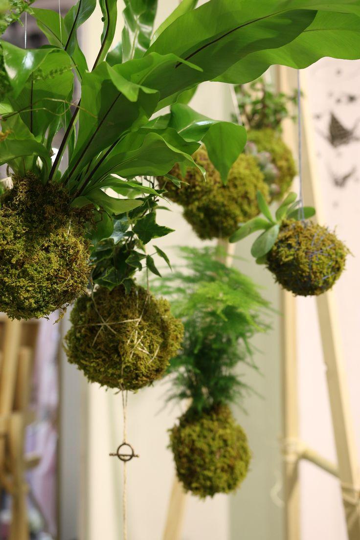 123 best vegetale images on pinterest jardinage plante. Black Bedroom Furniture Sets. Home Design Ideas