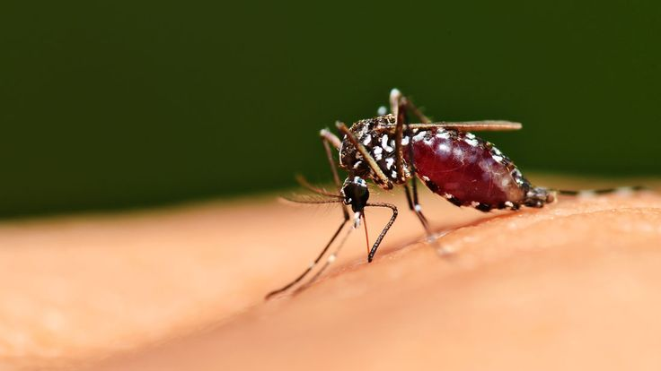 World Malaria Day: 4 Herbs That Relieve Symptoms Of Malaria