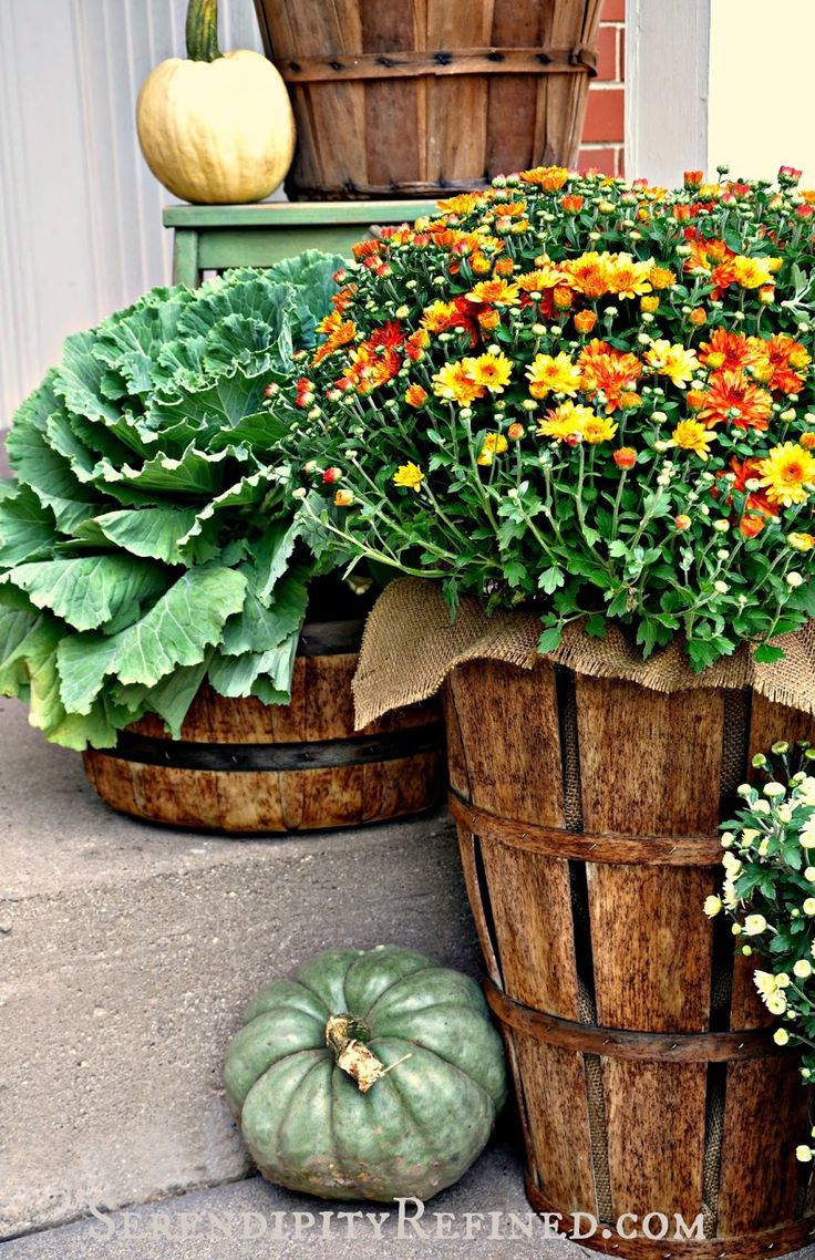 Gorgeous baskets and burlap to show off flowering kale and mums. Pair it with unique pumpkins on your porch for autumn!