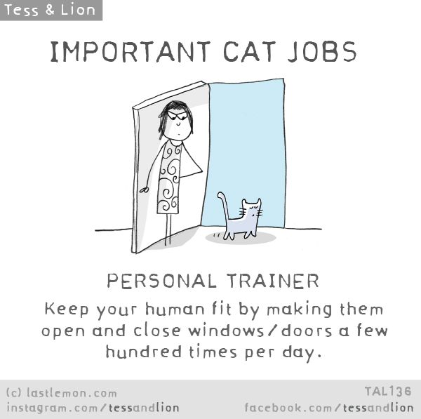 IMPORTANT CAT JOBS: PERSONAL TRAINER - Keep your human fit by making them open and close windows/doors a few hundred times per day.