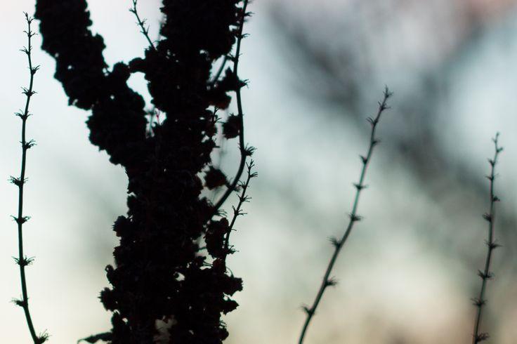 Ernest Davies Photography. Pagham, Winter Flora. #wildflowers #flowerphotography #macro #wildflowers #naturephotography #flora #botany #nature #pagham #westsussex #bognor #edpic