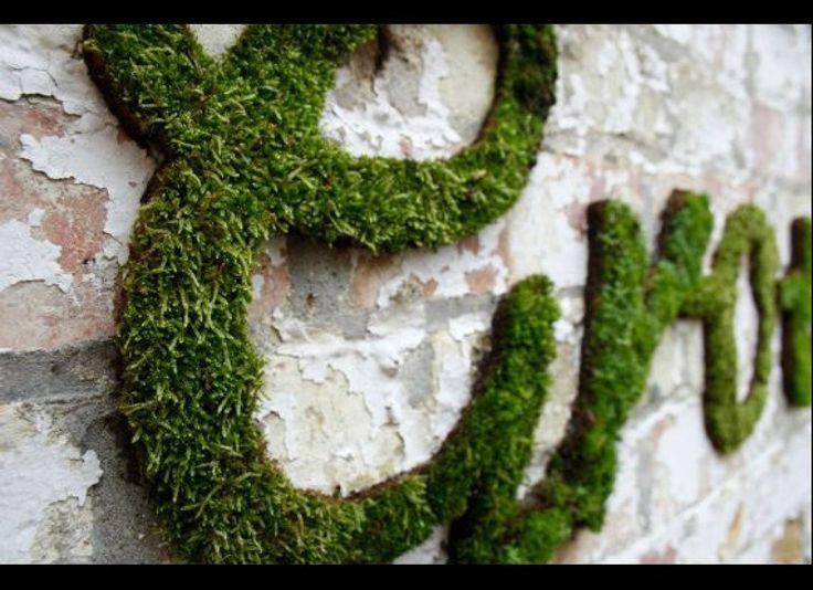 """Já imaginou fazer em casa uma tinta natural, a base de musgos, que depois de grafitada se transforma em uma planta? A redação do Catraca Livre te ensina. Itens necessários: 1- Três ramos de musgo 2- - Liquidificador 3- Gel para retenção de água de jardinagem (pode ser substituído por cerveja) 4- 700ml de água...<br /><a class=""""more-link"""" href=""""https://catracalivre.com.br/geral/sustentavel/indicacao/receita-caseira-aprenda-a-fazer-um-graffiti-planta-com-musgos/"""">Continue lendo »</a>"""