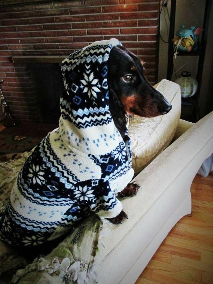 OMG doxie hoodie
