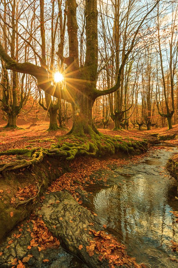~~Otzarreta late fall ~ autumn in Gorbea National Park, between the provinces of Alava and Vizcaya in Basque Country, Spain by Daniel Rivas~~