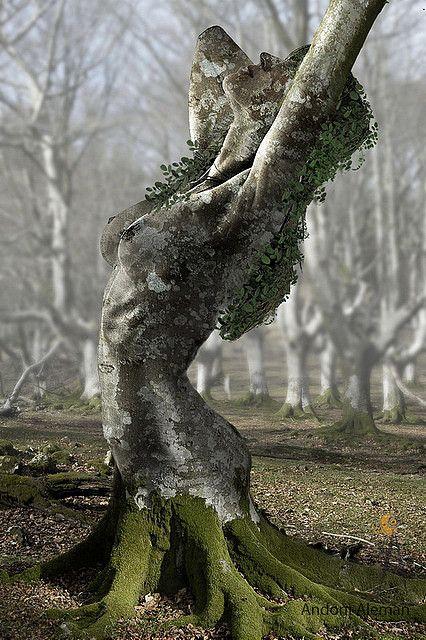 Druids Trees:  A tree spirit.