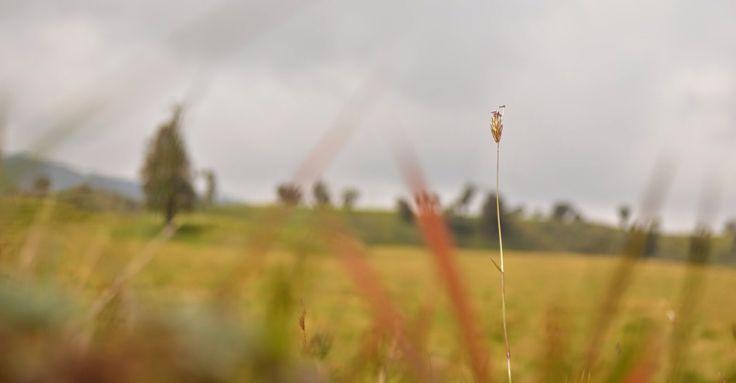 Mis fotos en http://juandavidhurtadobedoya.blogspot.com/p/fotografia.html?m=1 o www.vidasabatica.com #SerieParamo