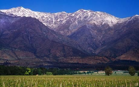 Chilean vineyards under the Andes