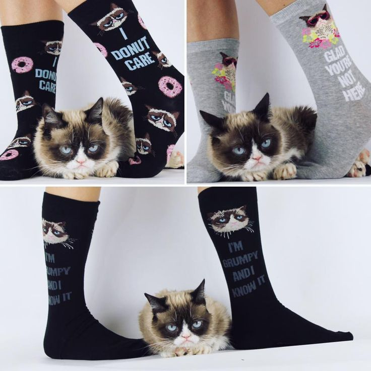 315 best images about grumpy cat on pinterest