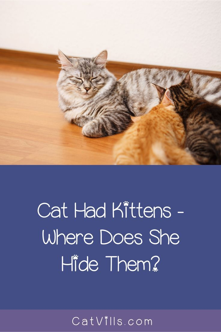 Cat Had Kittens Outside Where They Hide Them And Why Catvills In 2020 Cats Kittens Cat Having Kittens