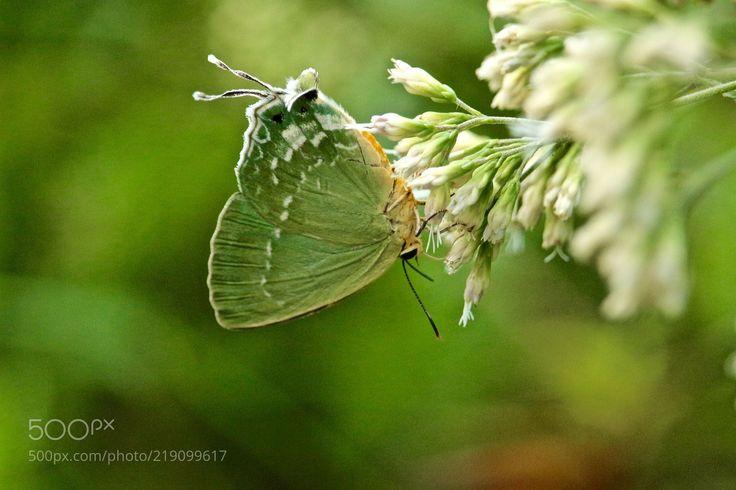 Upside Down (Helen Liao / Taipei / Taiwan) #Canon EOS 100D #macro #photo #insect #nature