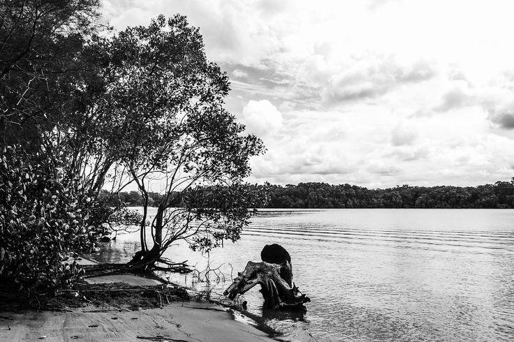 Tinchi Tamba Wetlands Reserve - Bald Hills, QLD, Australia - Monochrome - Zac Harney Photography