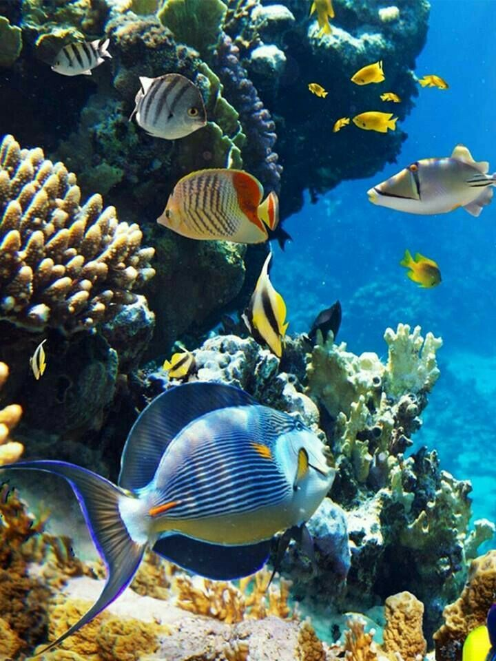 Tropicalfishocean Beautiful Sea Creatures Sea Animals Sea Fish