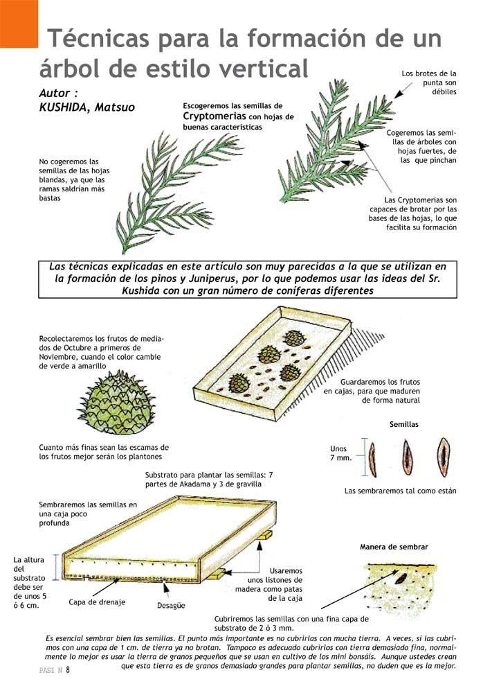 La verdad sobre las semillas de BONSAI - Taringa!