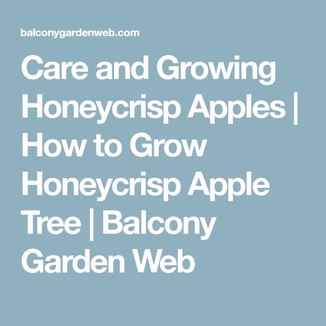 Care and Growing Honeycrisp Apples | How to Grow Honeycrisp Apple Tree | Balcony Garden Web