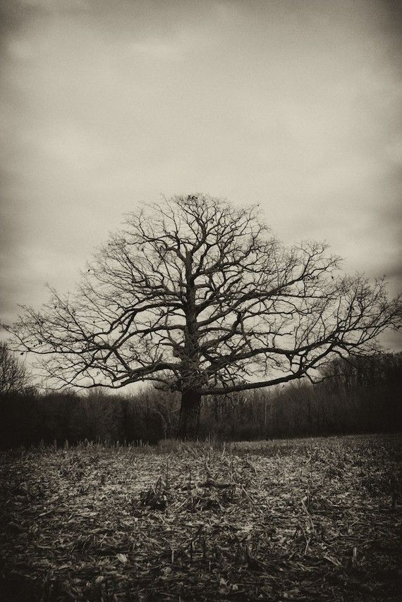 Creepy Tree in black and white by carolraderphotos on Etsy, $20.00