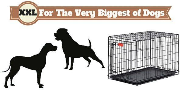 Complete Guide On What Size Dog Crate You Should Get And