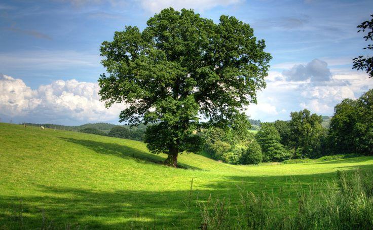 Karta piąta – Drzewo5