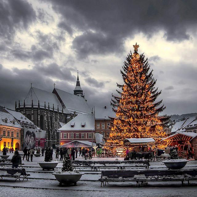 Awesome Christmas tree in Brasov, Romania