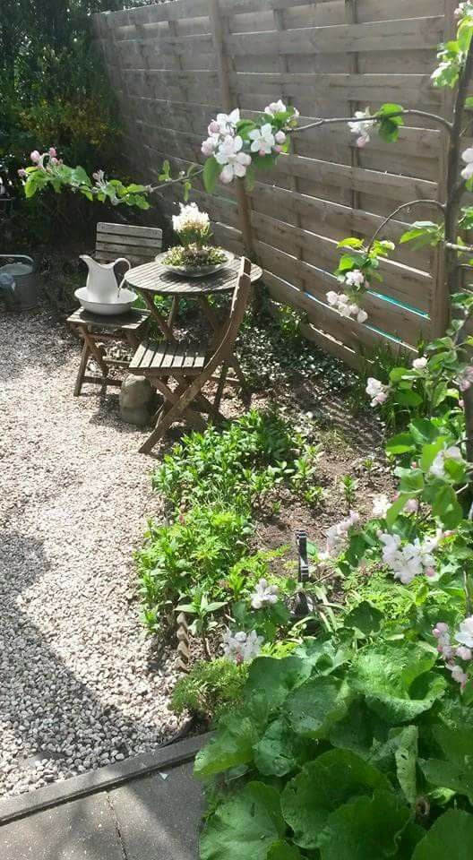 Pin By Meryl Dimarsico On Back Yard Gardening Pinterest