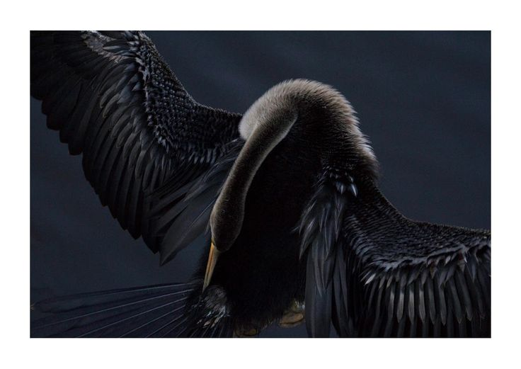 2015 Audubon Photography Awards Top 100 | Audubon