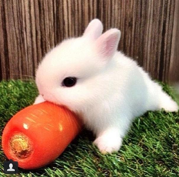 Best Baby Bunny Food