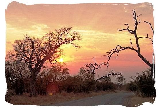 The South African Bushveld...