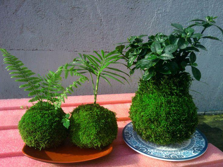 美しいヒスイの玉苔苔創造風景盆栽放射マイクロミニ人格デスクトップ鉢植えの花や植物 - 淘宝網
