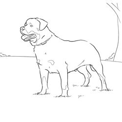Rottweiler Coloring Page Dog Patterns Pinterest Rottweiler Coloring Pages