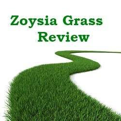 For those of you looking for a greener lawn with less maintenance, then you have probably heard about zoysia grass. I thought I would give some zoysia grass reviews so that you know both the pros and cons of putting the grass in your yard as well as discussing the option of putting in zoysia plus, zoysia sod or using zoysia seeds.