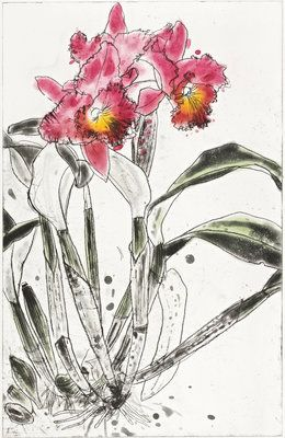 Orchid 1985 by  Elizabeth Blackadder, i really love this water colour painting because, she has the thick dark outline, i think that it adds allot of character to the painting.