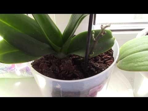 мой самый простой уход за орхидеями - YouTube