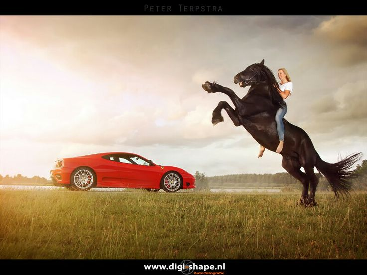 Prancing horse and a Ferrari Challenge Stradale,  shot last august in The Netherlands.