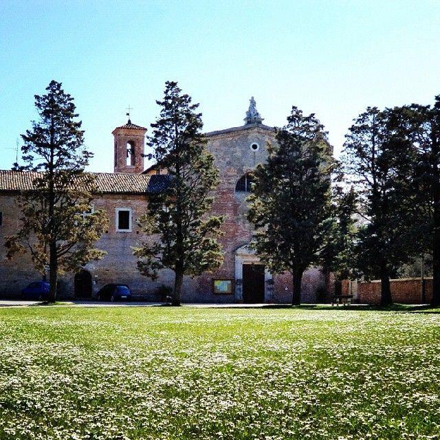 #Senigallia non è solo mare!  basta spingersi di poco verso l'interno e godere di questi #paesaggi! Siamo davanti la #chiesadellegrazie e un tappeto di #margherite ci dà il benvenuto! Una sorpresa ci aspetta non appena si varca la soglia di ingresso... nella #chiesa è conservata la pala del #Perugino, restaurata lo scorso anno... una meraviglia da ammirare assolutamente! #igersitalia #igersancona #ilovesenigallia #igersmarche #marchetourism #discoverymarche
