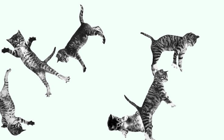 This website features bouncing cats. You can't help cheering up.