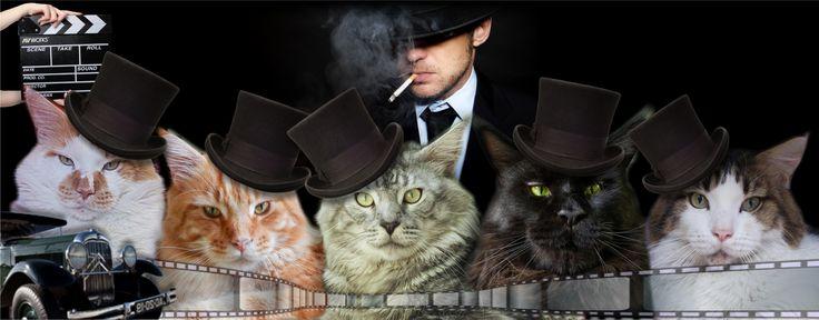 All my Ganster Cats