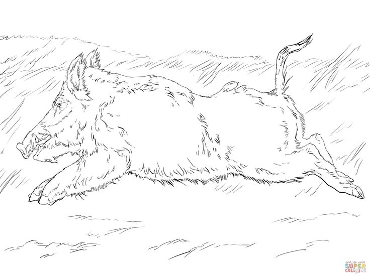 Running Wild Boar Coloring Page Free Printable Coloring Pages